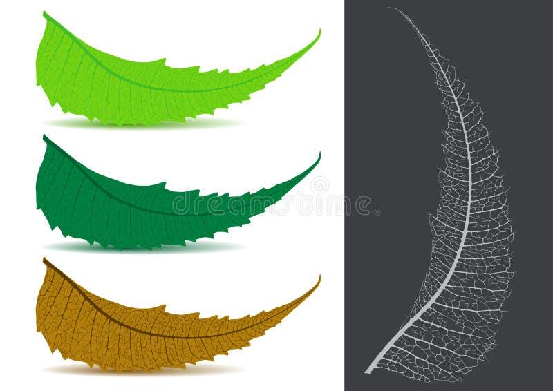 Indisches Kräuter-/medizinisches Blatt - Neem Vektor lizenzfreie abbildung