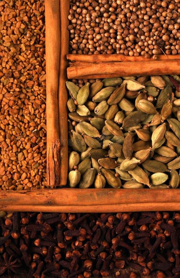 indisk krydda royaltyfria bilder
