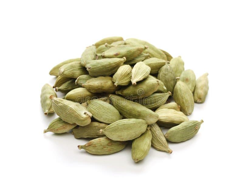 indisk krydda för kardemummacardamongreen royaltyfri fotografi