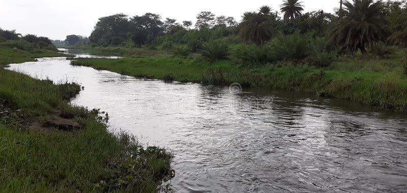 Indisk liten flod och skog royaltyfri fotografi