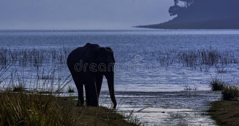 Indiska elefanter med den Ramganga behållaren i bakgrund - Jim Corbett National Park, Indien arkivbild