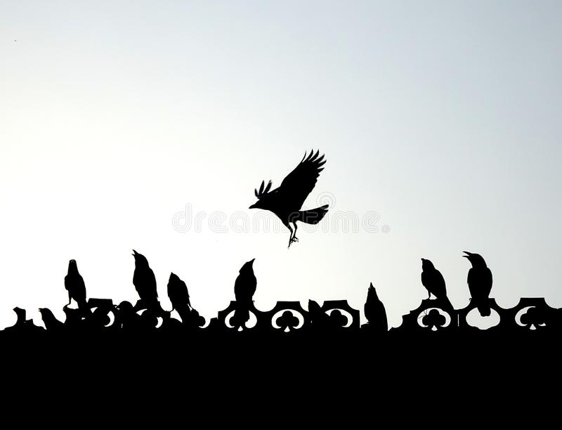 Indiska galanden som flyger, spela som slåss tycka om konturn fotografering för bildbyråer