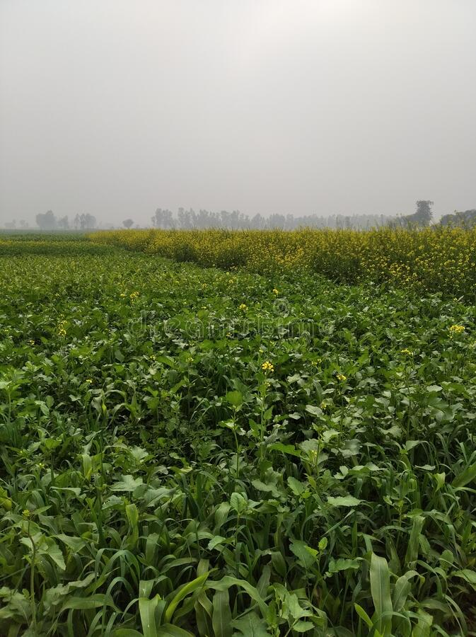 Indiska grönområden royaltyfri bild