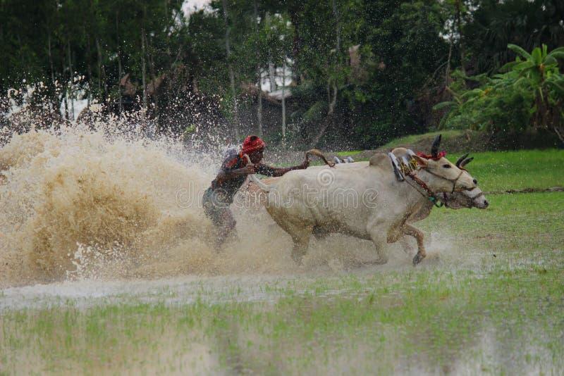 Indiska jordbrukare skördar ett paddyfält arkivfoto