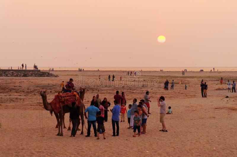 Indiska lokala turister med en kamel på stranden på solnedgången arkivfoto