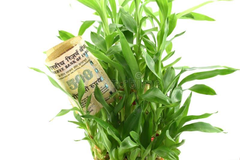 Indiska pengar i sidor för grön växt, begrepp av att få utdelningar eller retur från dina pengar, investerar den för bättre framt arkivbild