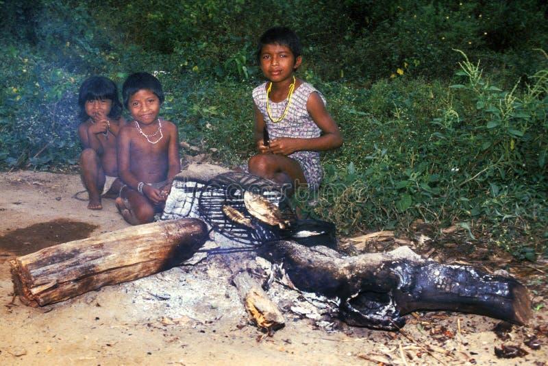 indiskt infött barn för awabrazil guaja arkivbild