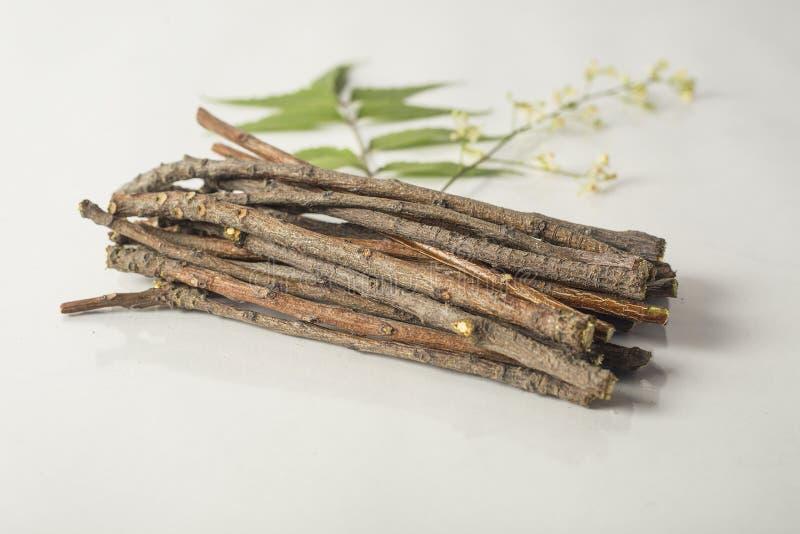 Indiskt neemträ klibbar, neemblommor och neembladet royaltyfria foton