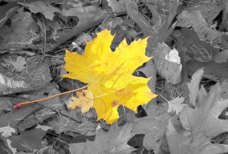 Individualidade do outono imagens de stock royalty free