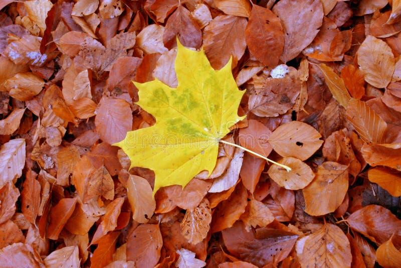 Individualista do outono fotografia de stock