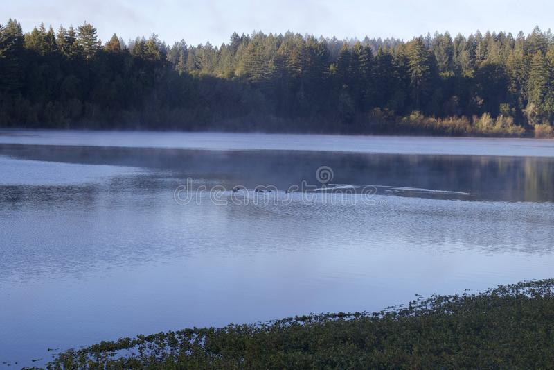 Individuato lungo il fiume russo, il parco regionale di lungofiume è appena minuti da Windsor e da Healdsburg del centro fotografia stock libera da diritti