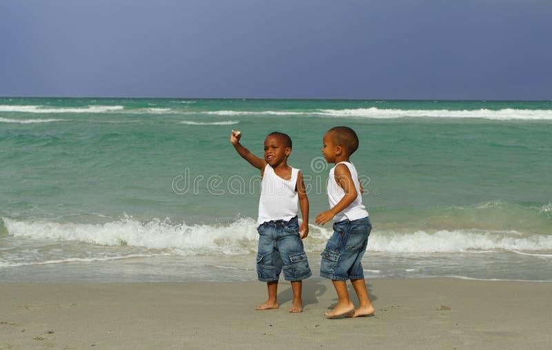 Individuazione dei Seashells immagine stock