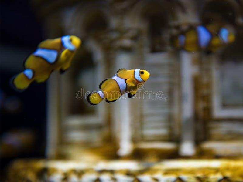 Individuazione del Nemo immagini stock libere da diritti