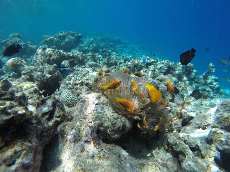 Individuazione del Nemo fotografie stock