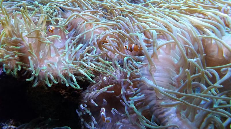 Individuazione del Nemo immagini stock