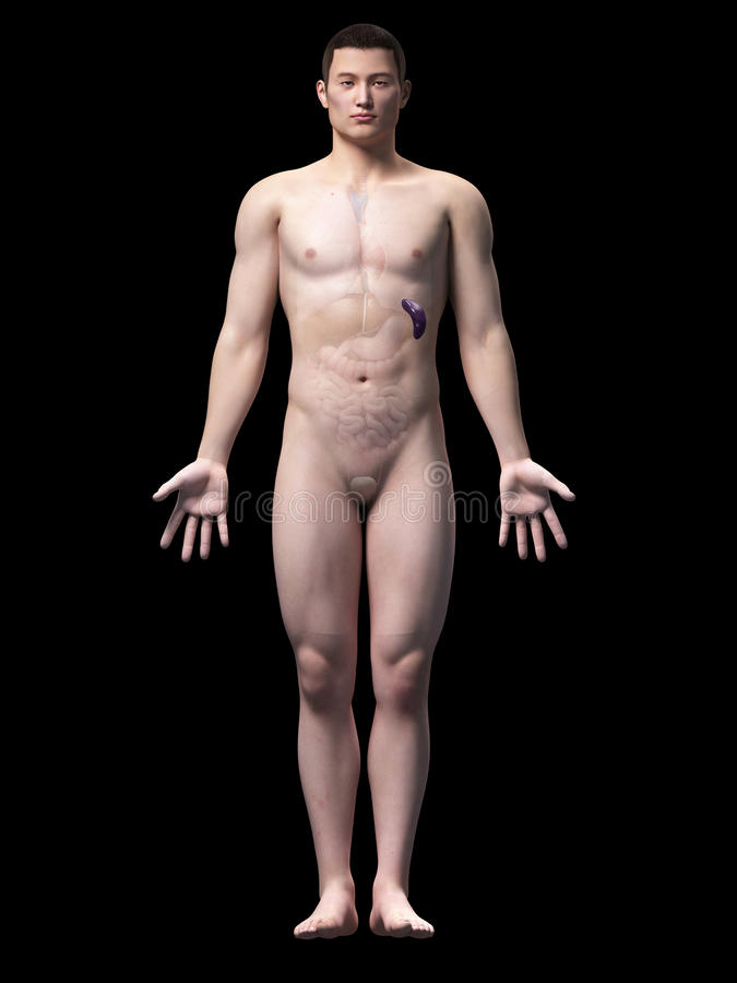 Individuo masculino asiático ilustración del vector