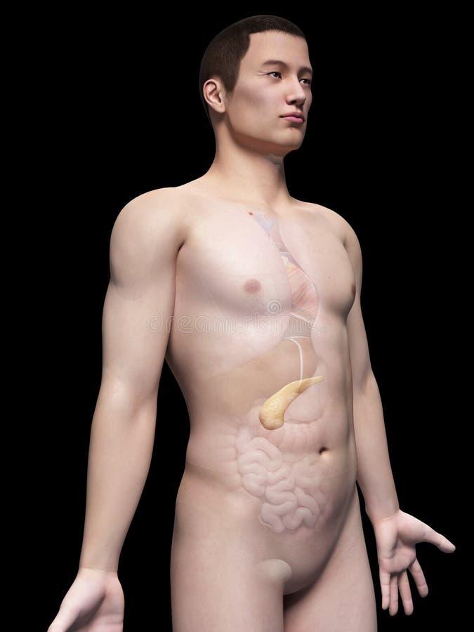 Individuo masculino asiático libre illustration