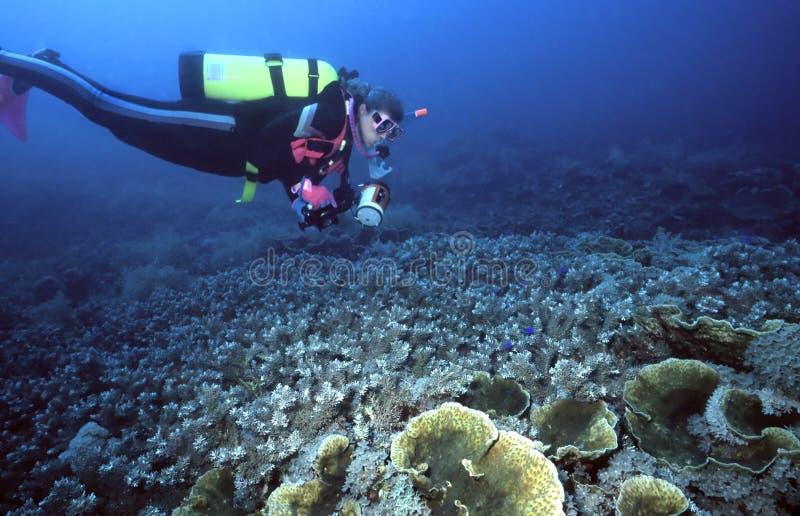 indo för koralldykarekvinnlig royaltyfri bild