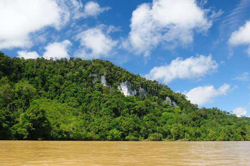 Indonésia - selva tropical no rio, Bornéu imagem de stock royalty free