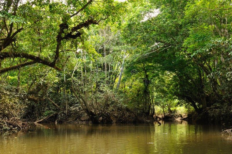 Indonésia - selva tropical no rio, Bornéu fotografia de stock