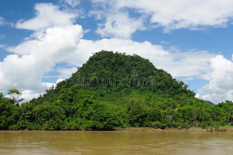 Indonésia - selva tropical no rio, Bornéu imagens de stock royalty free