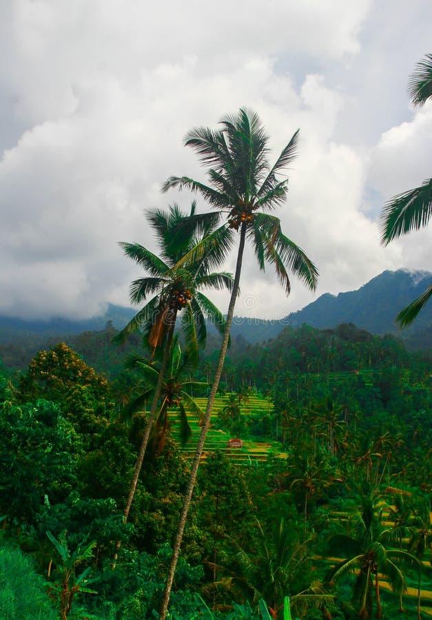 Indonesië, Bali royalty-vrije stock fotografie