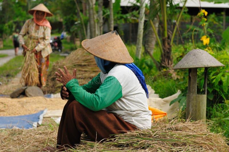 Indonesië, rijst-Arbeiders royalty-vrije stock fotografie