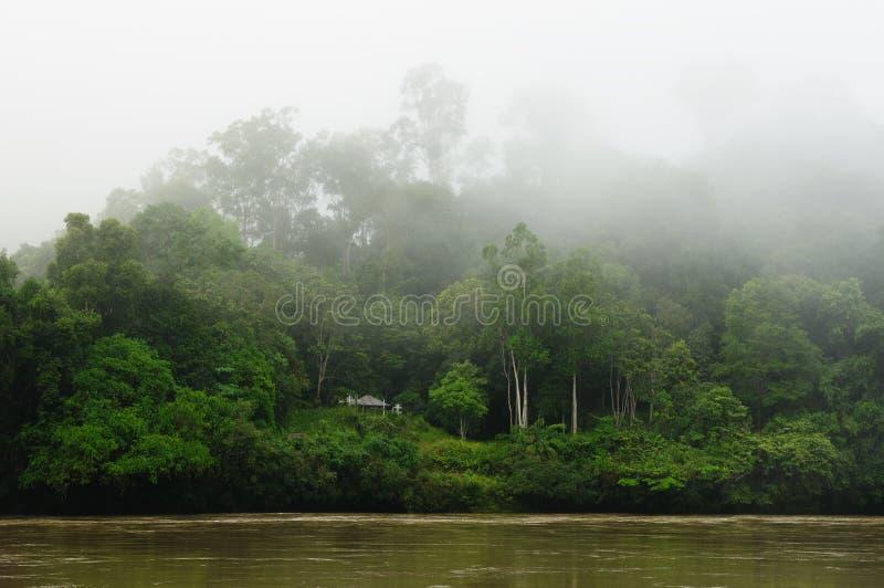 Indonesië - Tropische wildernis op de rivier, Borneo stock afbeeldingen