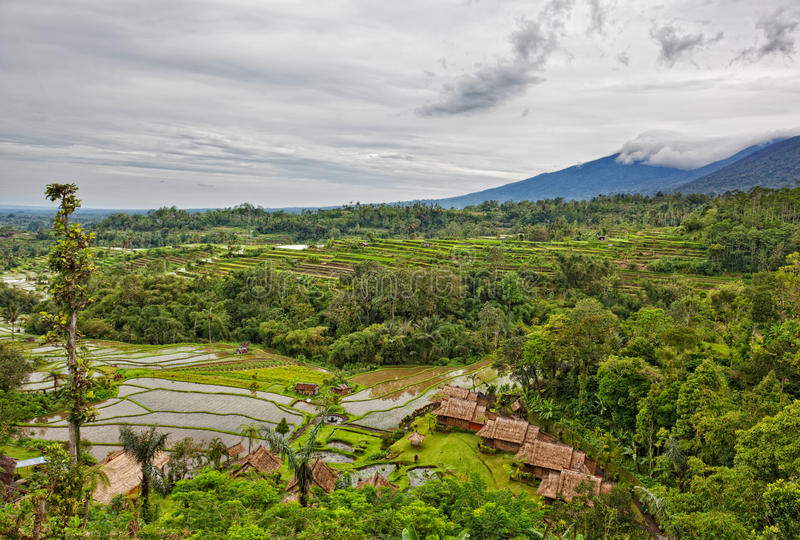 Download Indonesia stock image. Image of farming, organic, growth - 24748365