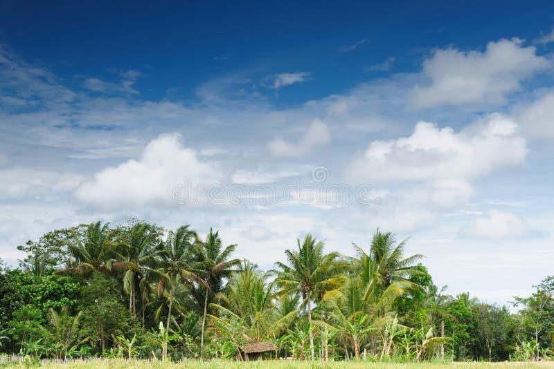 Download Indonesia - Rural Scene In Jawa Stock Photo - Image: 20624572