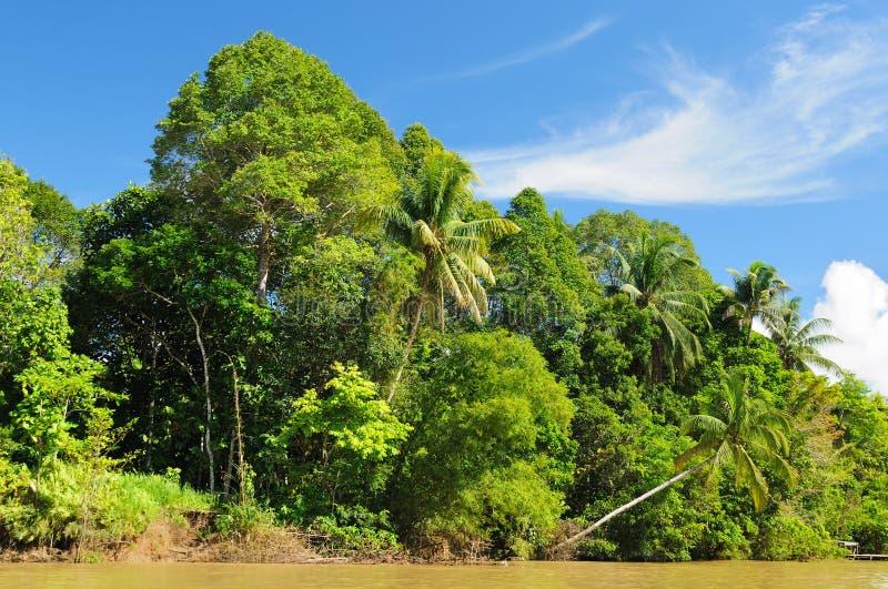 Indonesia - selva tropical en el río, Borneo fotografía de archivo
