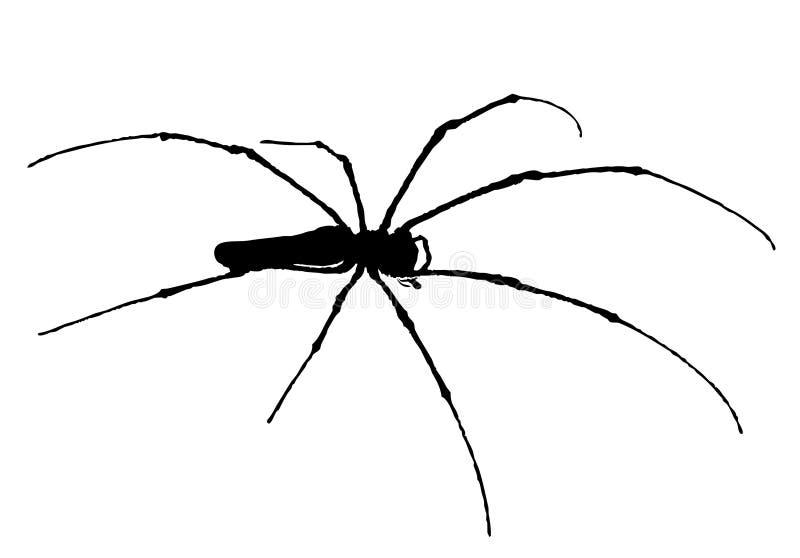 indonesia spindelvektor royaltyfria bilder