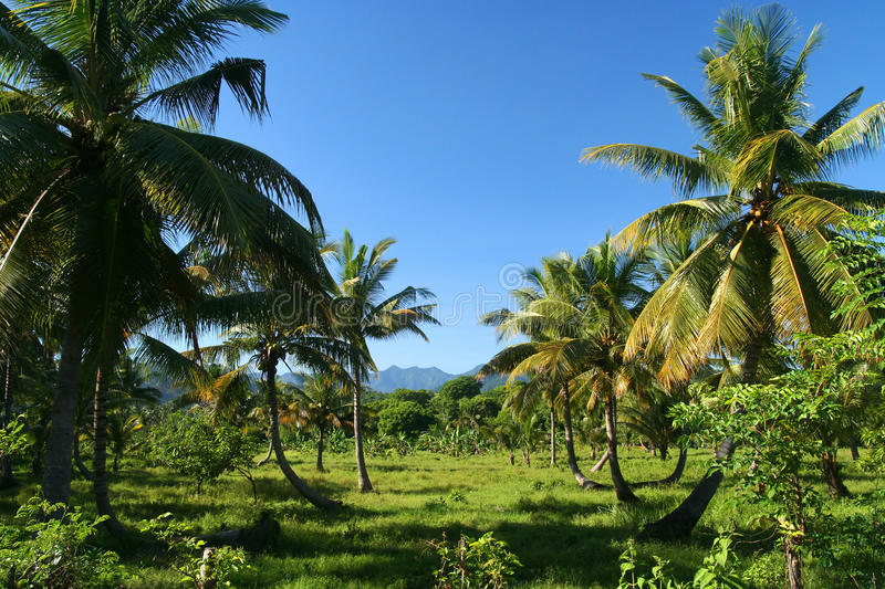 Indonesian Countryside stock image