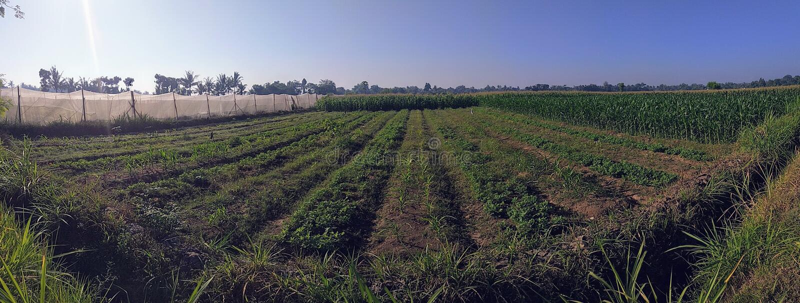Life of farm. Indonesian farming scene in landscape mode stock photo