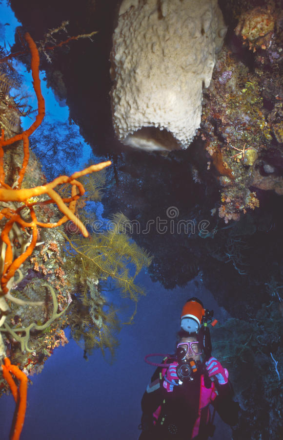 Indonesian Virgin reef royalty free stock image