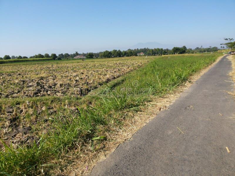 Indonesische Molkerei, Scheune durch Feld von Mais stockfoto