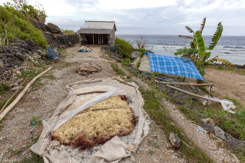 Indonesischer Meerespflanzenbauernhof lizenzfreies stockfoto