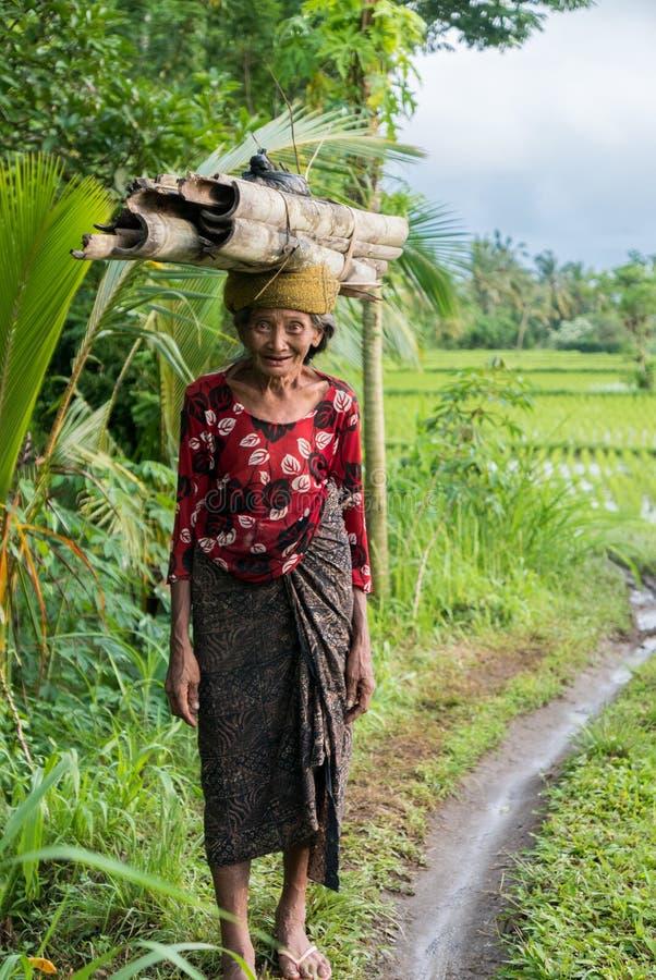 Indonesisk kvinnabonde som går till och med risfälten i Ubud, arkivfoton