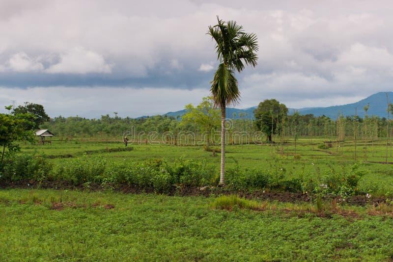 Indonesisk natur royaltyfria bilder