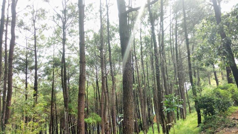 Indonesisk skog royaltyfri bild