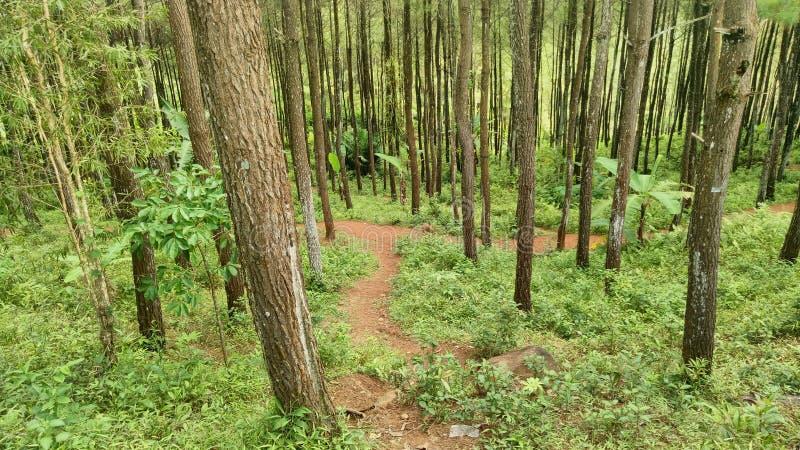 Indonesisk skog arkivfoton