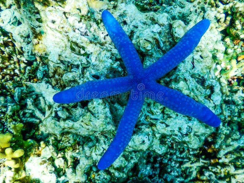 Indonezja Bali Menjangan wyspa Podwodna obraz royalty free