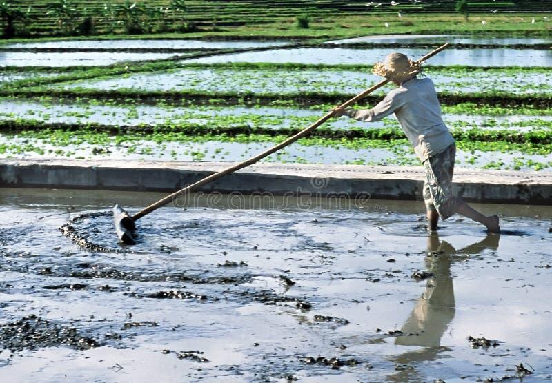 indonezyjska rolnik obraz royalty free