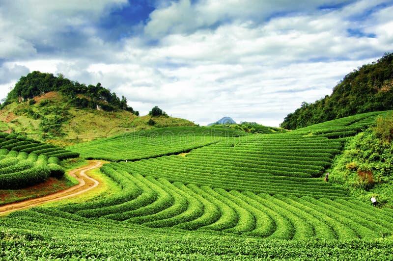 Indonezyjski halny plateau zdjęcie royalty free