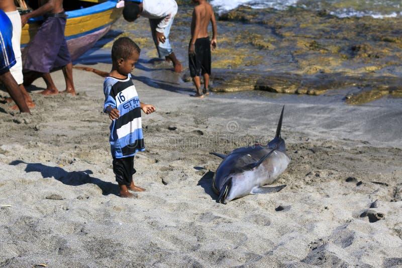Indonezyjskiej chłopiec przyglądający nieżywy delfin zdjęcie stock