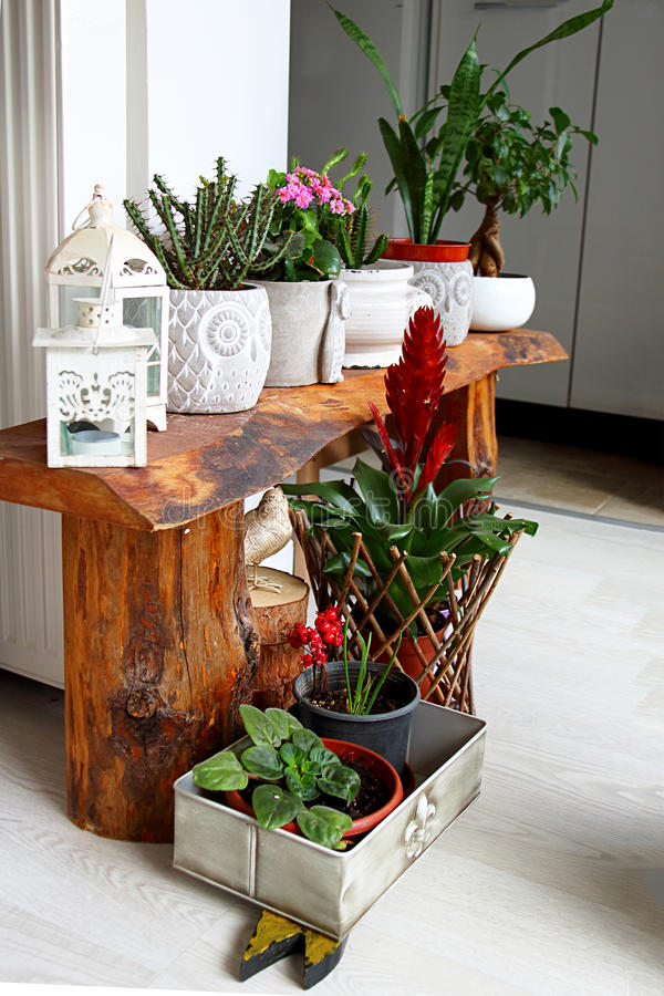 Indoor Botanic Garden For Room Decoration royalty free stock photo