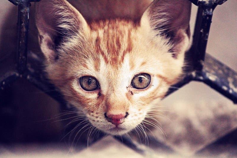 Indoor Cat Portrait Free Public Domain Cc0 Image