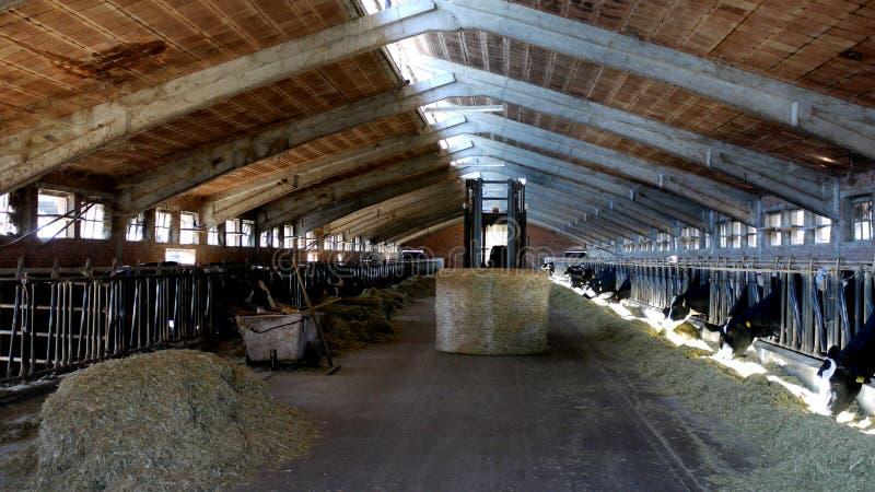 Indoor dairy farm royalty free stock photos