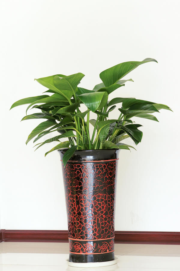 Download Indoor ornamental plants stock photo. Image of container - 23220334