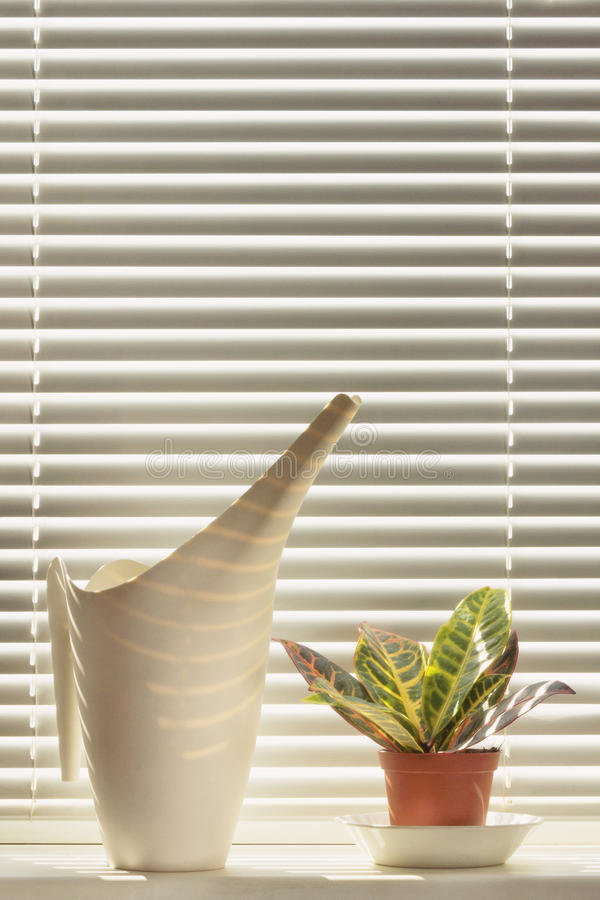 Indoor plant and watering can on the windowsill royalty free stock image
